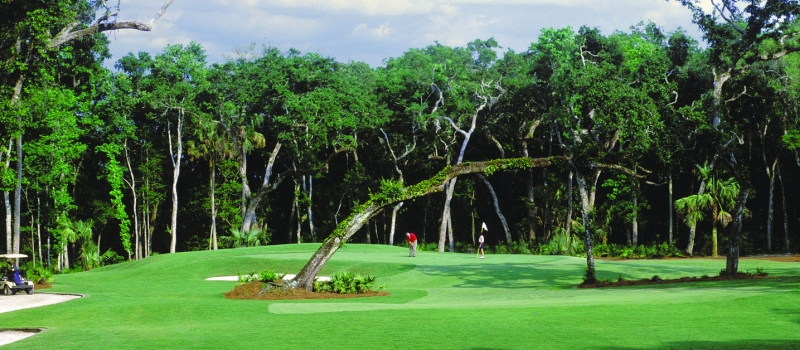 Palencia Club - Leaning Tree