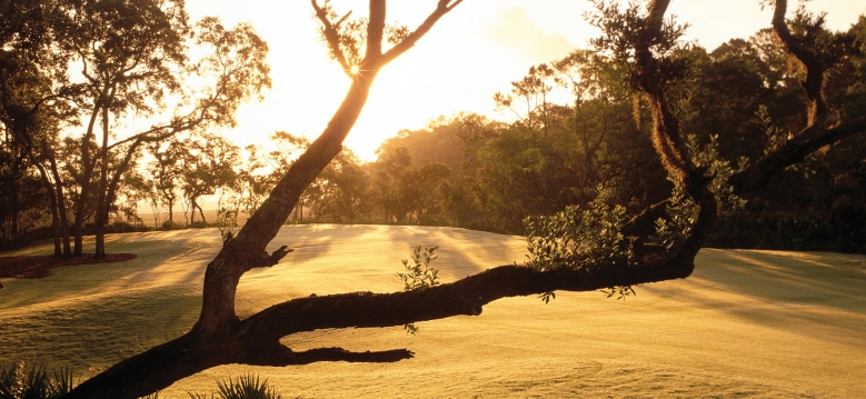 Palencia Club - Tree Sunrise